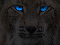 Wildcat Wallpaper